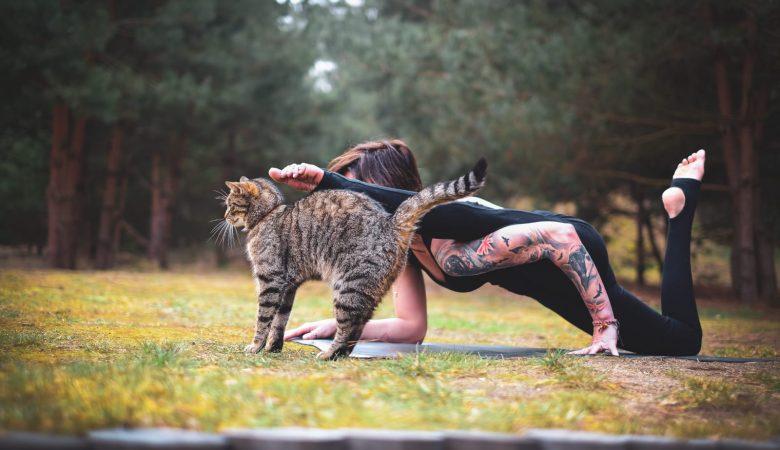 yoga joga
